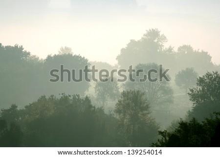 Early morning mist in rural Italy. Ponzano Romano, Italy in summer. - stock photo
