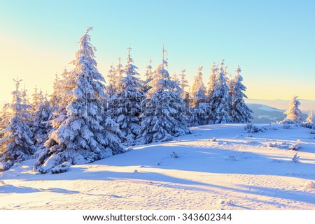 Early morning mysterious sunbeam shelter sky and forest covered with snow, drawing the way for adventurous extreme traveler. - stock photo