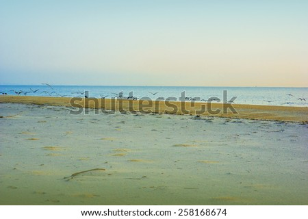 Early morning on Sandy Hook Beach, New Jersey, USA. Scenic view over Atlantic ocean, colorful sky, horizon, many birds flying over shore. Instagram filtered look. - stock photo