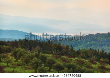 Early morning over an olive grove, Tuscany, Italy - stock photo