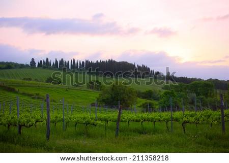 Early morning over vineyards, Tuscany, Italy - stock photo