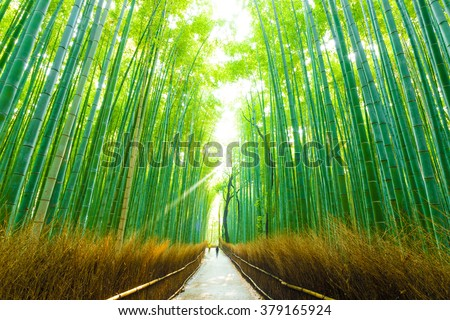 Early morning people walking through tall tree line road of Arashiyama Bamboo Grove in Kyoto, Japan - stock photo