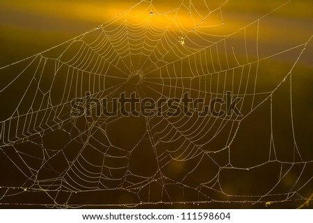 early morning spiders web