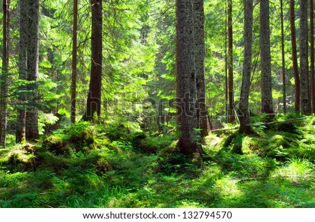 Early morning sun in the green forest - stock photo