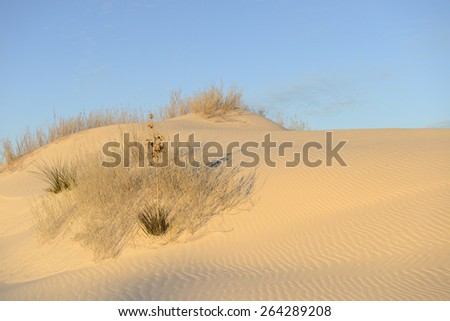Early Morning Sun Light on Sand Dune - stock photo