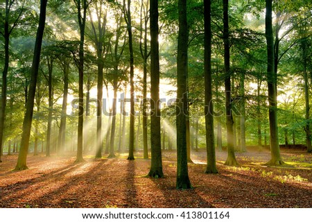 Early morning sun rays shining through an autumn forest - stock photo