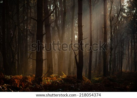 Early morning sunlight falls in a misty Autumn woodland - stock photo