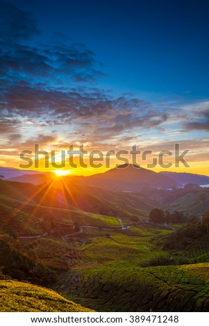 Early morning sunrise over hilly tea plantation in Cameron Highlands, Pahang, Malaysia. vertical - stock photo
