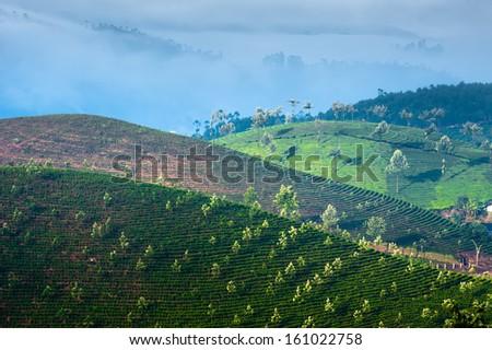 Early morning sunrise with fog at tea plantation. Munnar, Kerala, India. Nature background - stock photo
