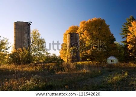 Early morning sunshine colors golden maple trees at an abandoned farm site in Kalamazoo Co., Michigan. - stock photo