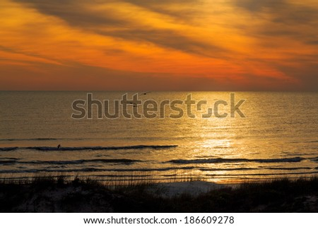 Early morning sunshine reflects upon the ocean as seabirds and dunes are silhouetted in the light.