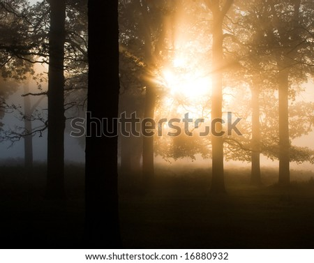 Early morning trees in the mist - stock photo
