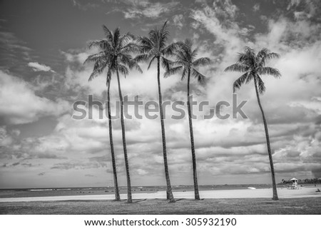 Early morning view of five coconut palm trees on a Honolulu beach with a stiff trade wind blowing against a partly cloudy sky background in tones of black, white, and gray.