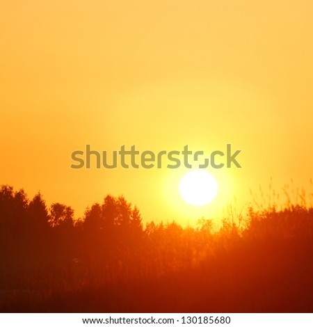 early orange clear sunrise in the forest in summer - stock photo