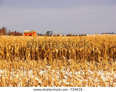 Early snow catches harvest almost done - stock photo