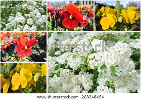 Early spring flowers (white, red and yellow) on a sunny day; photo collage. - stock photo
