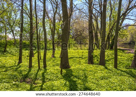 Early Spring greenery in this woodland in Tinicum Township in Eastern Pennsylvania. - stock photo