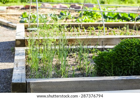 Early summer in urban vegetable garden. - stock photo