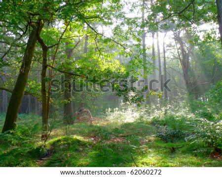 Early summer morning sun shining through the trees in the forest (HDR) - stock photo