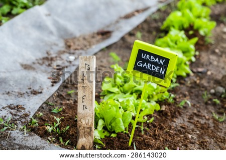 Early summer planting in urban garden. - stock photo