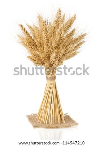 ears of barley  isolated on white background - stock photo