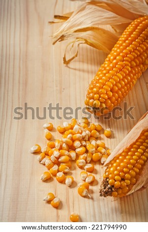 ears of corn composition - stock photo