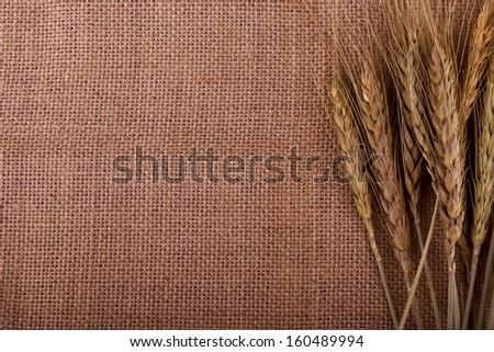 ears of wheat - stock photo