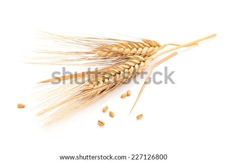 Ears of wheat and seeds isolated on white background. - stock photo