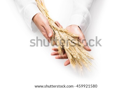 Ears of wheat in man hands isolated on white background - stock photo