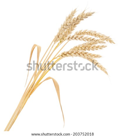 ears of wheat on a white background  - stock photo