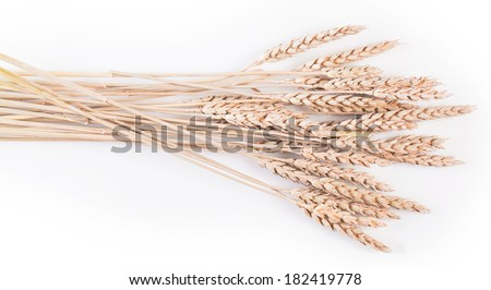 Ears of wheat or rye on white background