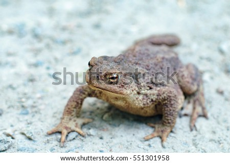 Earth Toad