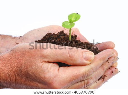 Earth with sprout in hands - stock photo