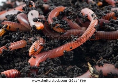 Earth worms in the earth
