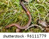 earthworm on grass and moss - stock photo