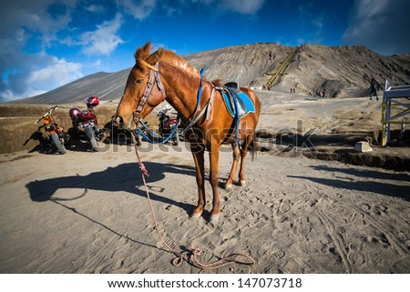 EAST JAVA,INDONESIA-MAY 05 :Horse for tourist rent at Mount Bromo volcanoes in Bromo Tengger Semeru National Park on May 05,2013 in East Java, Indonesia. - stock photo