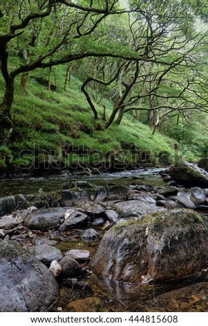 East Lyn River, Lynmouth, Exmoor, Devon, England. Showing the ancient oaks clinging to the river banks.                       - stock photo
