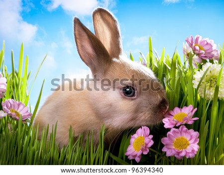 easter Baby rabbit on green grass with spring flowers - stock photo