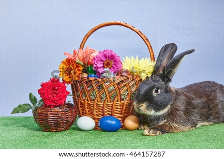 Easter basket with flowers. Cute black bunny