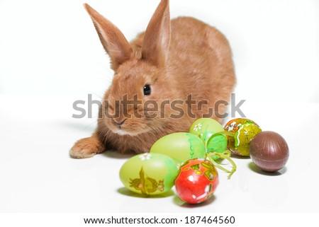 Easter Bunny.   - stock photo