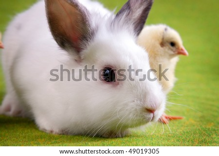 Easter bunny and chick in background - stock photo