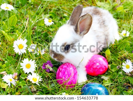 Easter bunny and easter eggs - stock photo