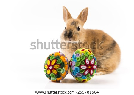 Easter bunny and Easter eggs on white background isolated - stock photo