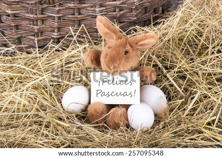 Easter bunny holding a card with spanish text Happy Easter /Happy Easter/ spanish - stock photo