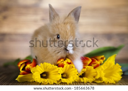 Easter bunny in flowers  - stock photo