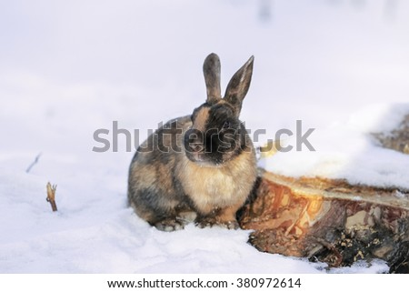 Easter bunny in the snow - stock photo