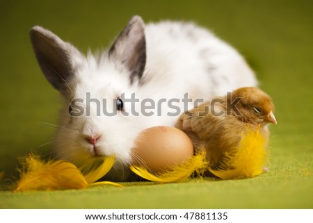 Easter bunny on chick green background - stock photo