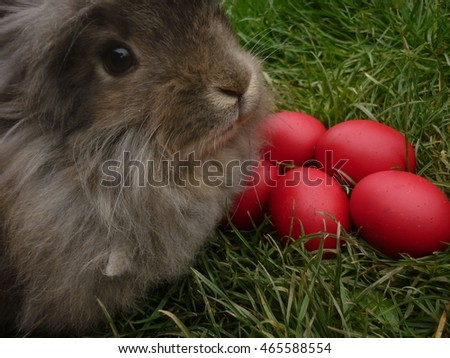 Easter bunny with red eggs