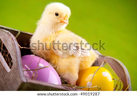 Easter chick in bucket with painted eggs