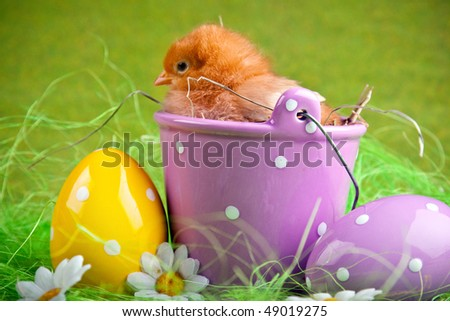 Easter chick sitting on bucket - stock photo
